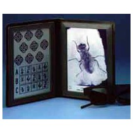 Stereotest Motyla nr kat.13108